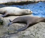 P-animals-seals