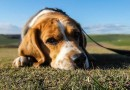 DOG FOOD – IS IT GOOD FOR YOUR PET?