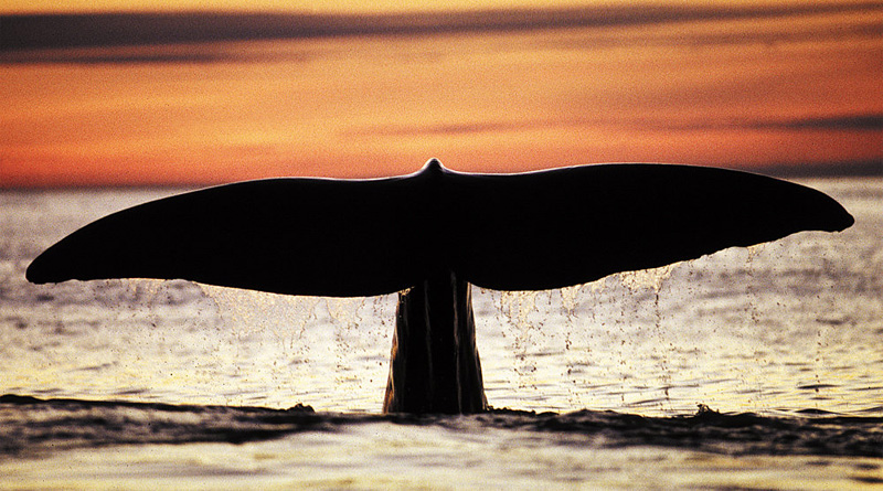 WHY DID WHALES TAKE TO THE WATER?