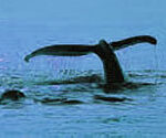 P-animal-whale-sea