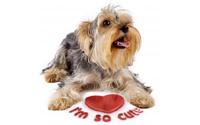 P-animal-pet-communicate