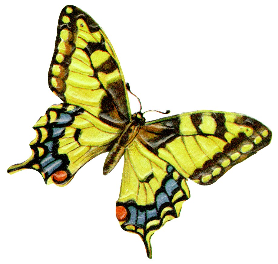 HOW LEADERS AND MANAGERS MANIFEST THE BUTTERFLY EFFECT ...