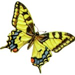 HOW LEADERS AND MANAGERS MANIFEST THE BUTTERFLY EFFECT