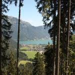 p-pertisau-austria-forest