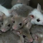 Passive mice