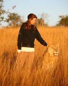 Stroking a lion