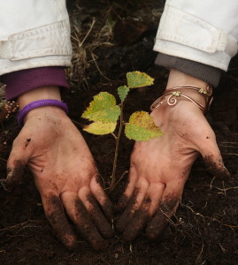 Hand planting trees