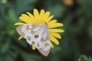 Moth on yellow flower