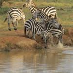 AFRICA'S HERITAGE PRESERVED BY JOSEPH MURUMBI
