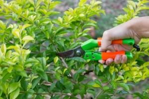 Gentle pruning