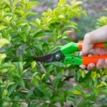 TIPS TO PREVENT GARDENING BACK PAIN