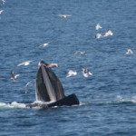 WHALES ABLE TO LEARN FROM EACH OTHER