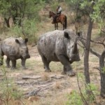 SAFARI GOERS BASE THEIR CHOICE ON CONSERVATION