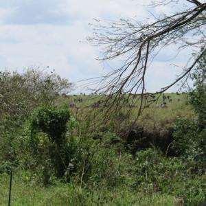 P-landscape-masai-mara