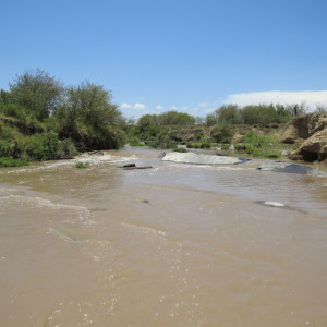 P-river-masai-mara-river