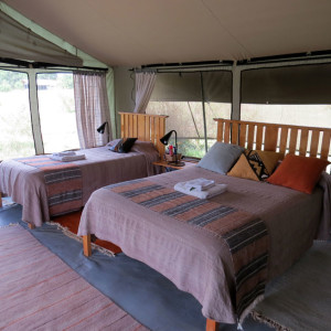 P-tent-africa-porini lion camp-beds