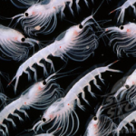 THE TRUTH ABOUT KRILL OIL