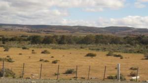 Chilean grassland