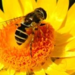 BEE PRODUCTS FOR HEALTH AND BEAUTY – MEET NATUREBEE