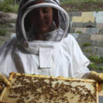 BEES, CANADA STYLE
