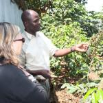 Coffee plants in small farm in Kenya