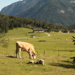 CYCLING, WITH A LITTLE HELP, IN TIROL