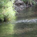 IBUPROFEN POSING POTENTIAL THREAT TO FISH