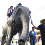THAILAND MUST ACT TO PREVENT ILLEGAL WILD ELEPHANT TRADE