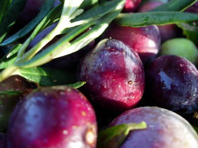 P-Provencal Olives-food