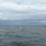 WHALE WATCHING WITH A GUARANTEE – IN QUEBEC