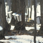 MAPLE SYRUP AT SUCRERIE DE LA MONTAGNE