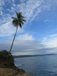 Puerto Viejo Palm Tree