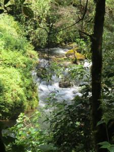 River Trees in Costa Rica