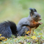 10 FUN FACTS ABOUT SQUIRRELS