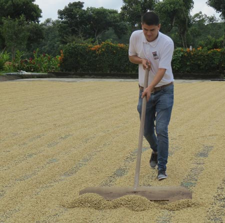 P-Doka-Coffee-plantation-costa-rica