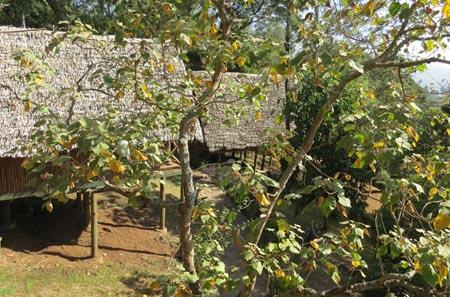 P-Tanzania-lodge-TropicalTrails