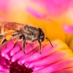 TOXIC NEONICOTINOIDS ARE IN OUR AIR