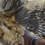 Hadzabe - killing an owl
