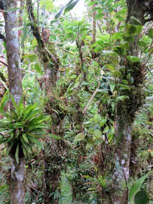 P-orchid garden-costa rica
