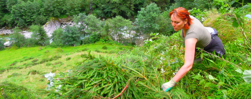 P-Austria-Volunteering Zillertal Nature Park-clearing plants