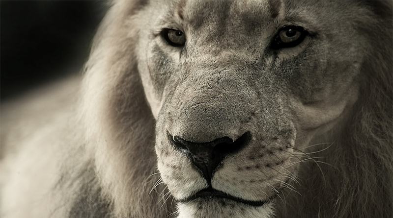TROPHY HUNTING: DECIMATING AFRICA'S LION POPULATION