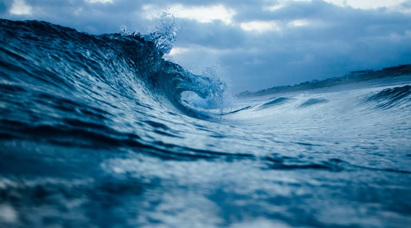 THE BUSINESS OF OCEAN CONSERVATION