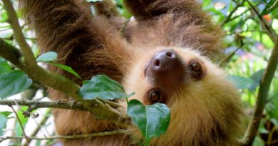 AMAZON: ICONIC WILD ANIMALS SUFFERING FOR SELFIES