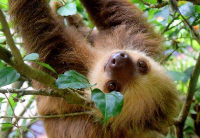 AMAZON: ICONIC WILD ANIMALS SUFFERING FOR SELFIES